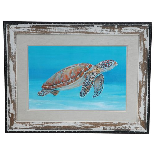 Ocean Sea Turtle 1 CVA3236
