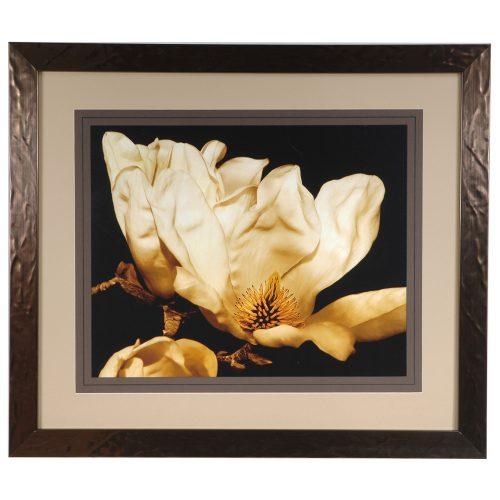 Buttercream Magnolia 2 CVA3275