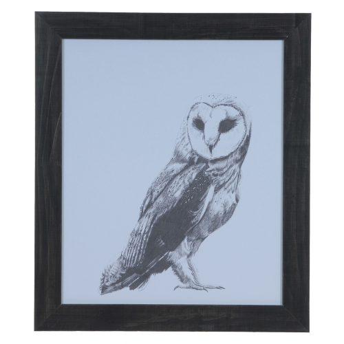 Owl CVA3557