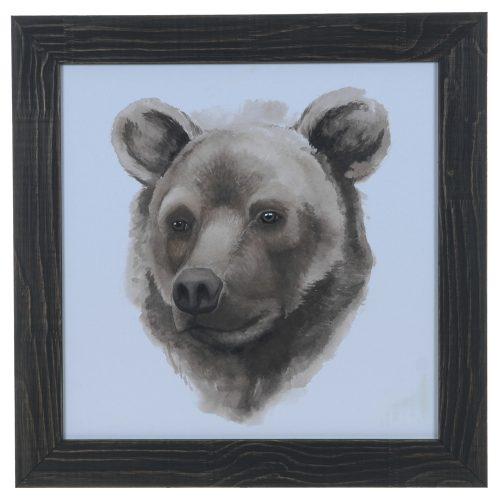 Animal Study (Bear) CVA3642