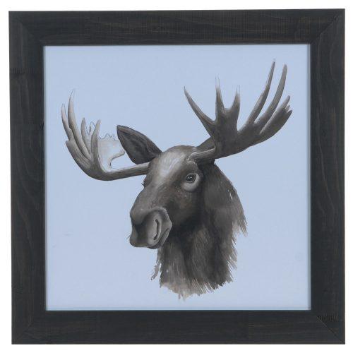 Animal Study (Moose) CVA3643