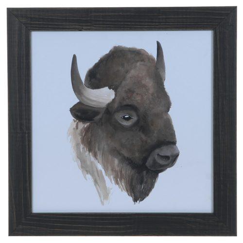 Animal Study (Buffalo) CVA3644