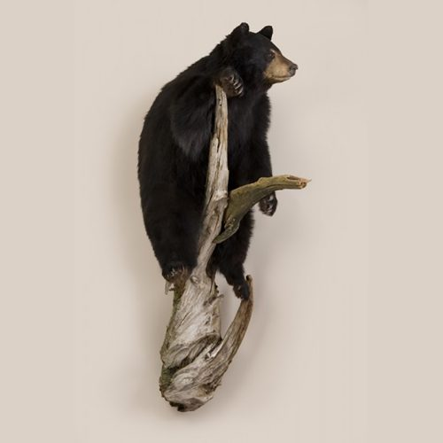 Small Black Bear - Wall Mount