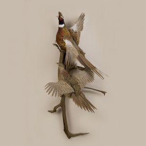 Double Ringneck Pheasants (Flying)