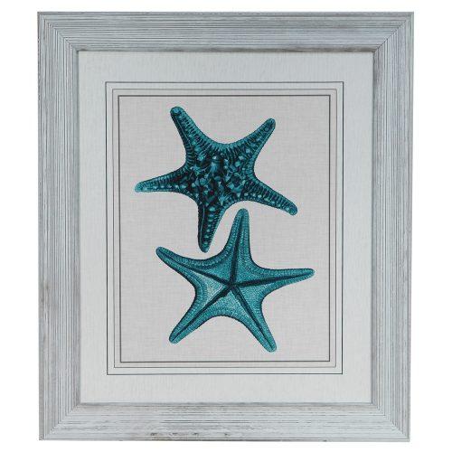 Starfish 2 CVA3319
