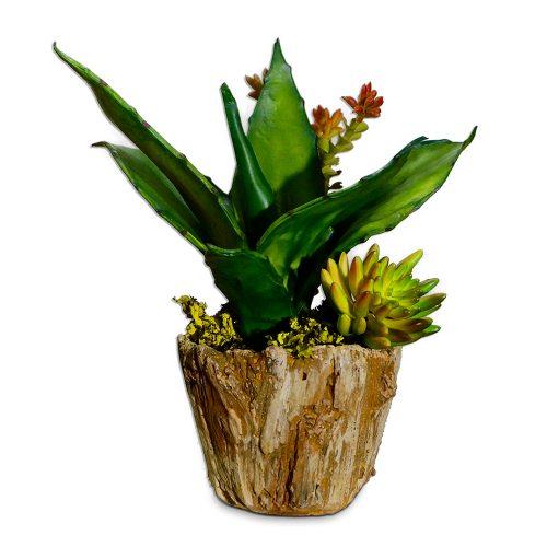 Green Succulent Arrangement in Petrified Wood Bowl