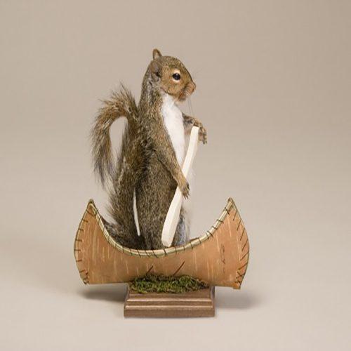 Squirrel (Canoeing)