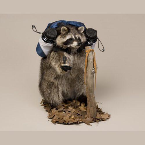 Hiking Raccoon