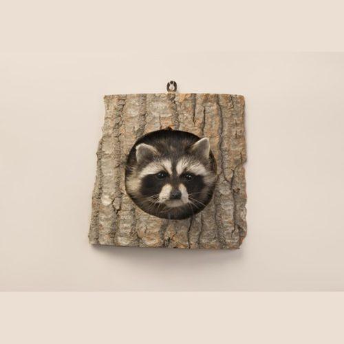 Peeping Raccoon