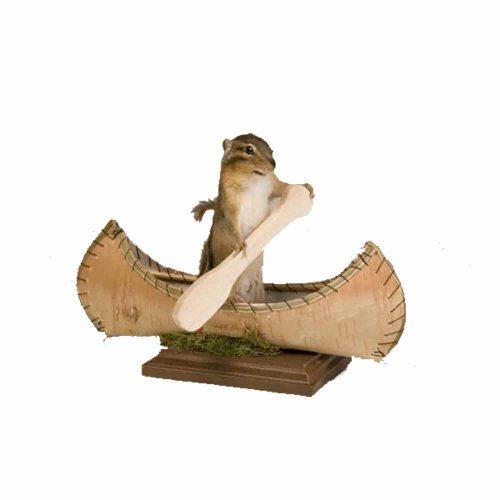Chipmunk in a canoe
